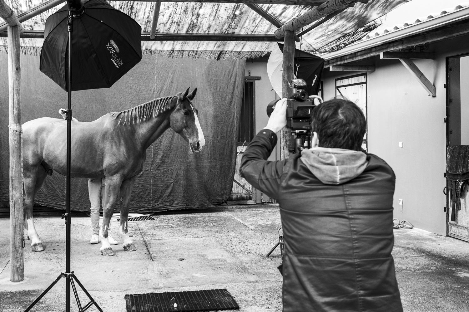 Viñon being photographed.Equine Photography