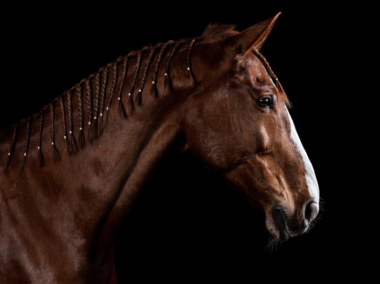 2019-Horses-Joao-Carlos-web-1 Equine Photography