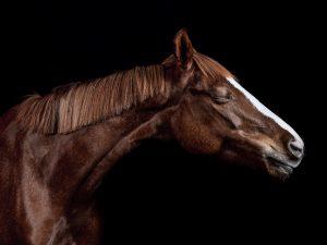 2019-Horses-Joao-Carlos-web-4-Equine Photography